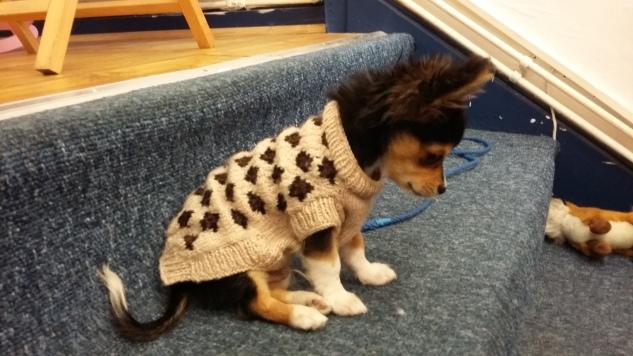 Finley's coat
